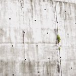 これがほんとの雀のマンションw石の側面の穴に1羽ずつ住んでるw
