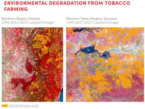 test Twitter Media - Tobacco growing causes deforestation and toxic pollution from harmful chemicals used. The waste from production pollutes our fragile ecosystems. Learn more in the #TobaccoAtlas https://t.co/CURkLvhyRb #EarthDay https://t.co/mnCCjeClrJ