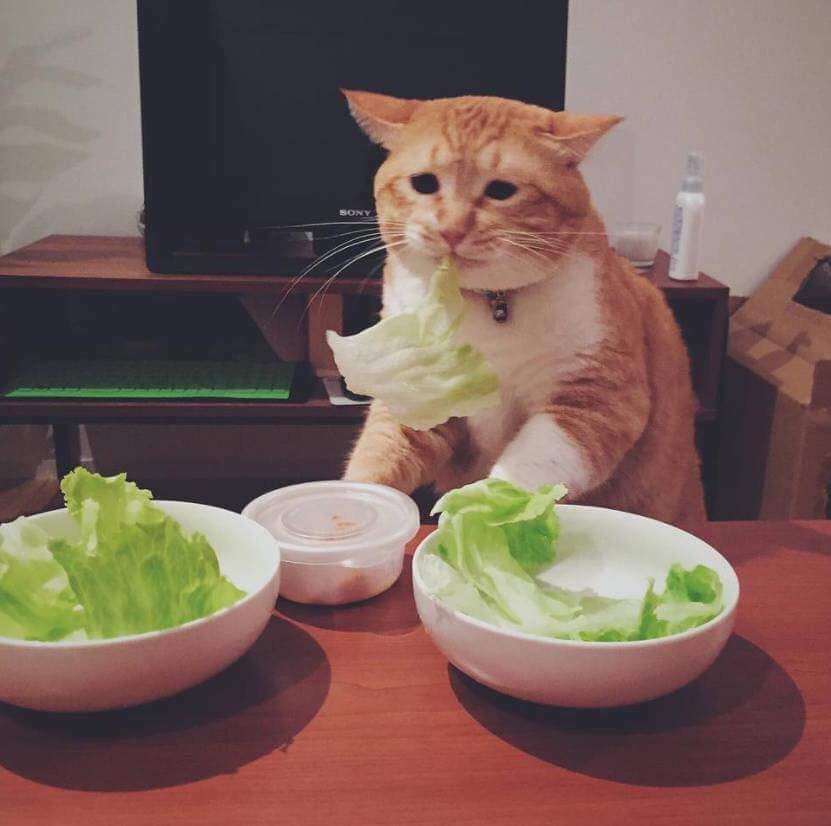 Кот Ничего Не Есть Похудела. Кот плохо ест и худеет: причины, безопасные и опасные симптомы, первая помощь, лечение