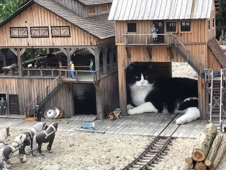 線路に猫立入のため安全確認をしており、しばらく運転を見合わせます