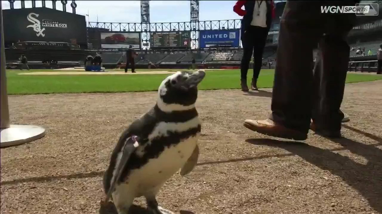 It's too damn hot for a penguin to be just walkin' around here. https://t.co/oZv267FbVH