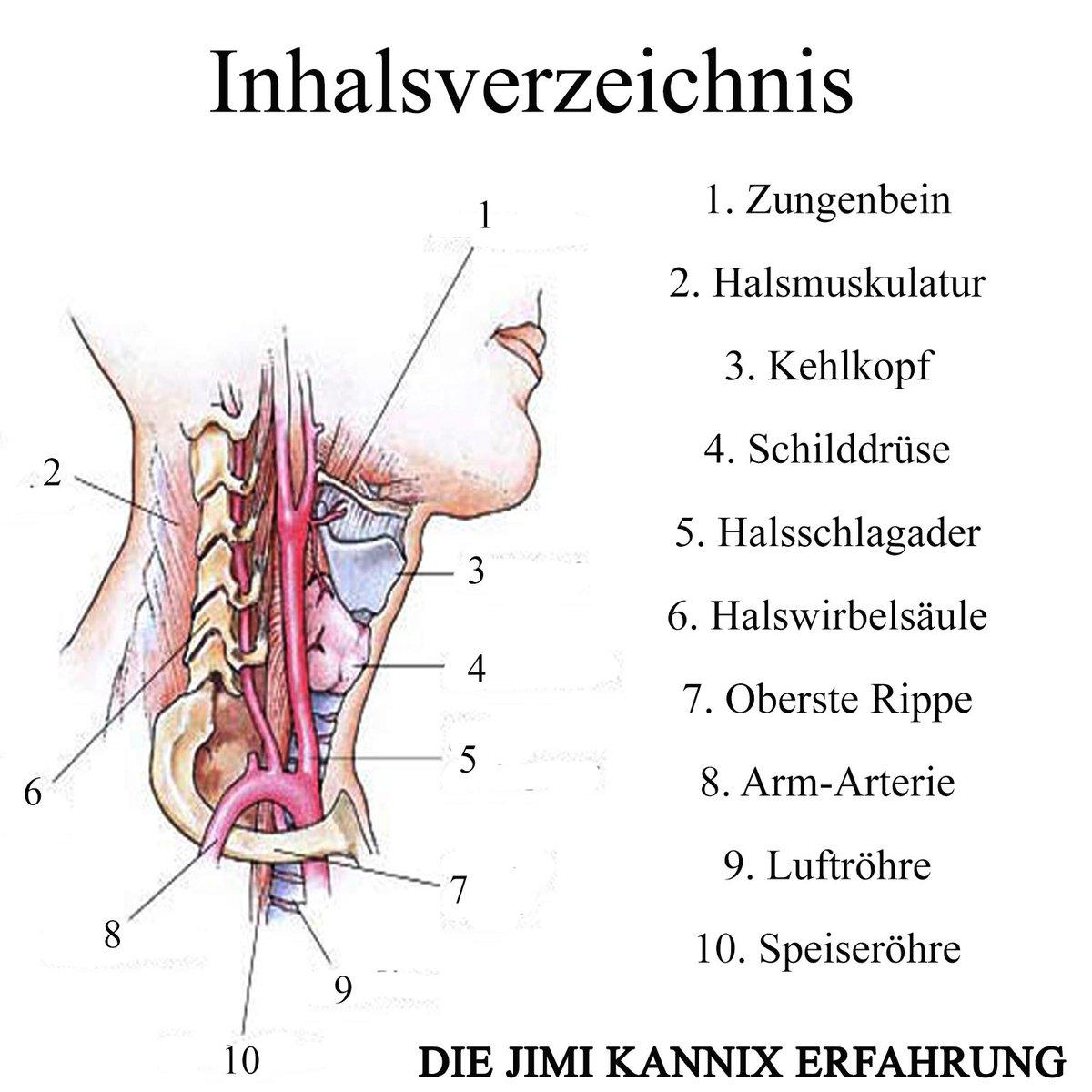 Wunderbar Menschliche Anatomie Halsmuskeln Fotos - Anatomie Von ...