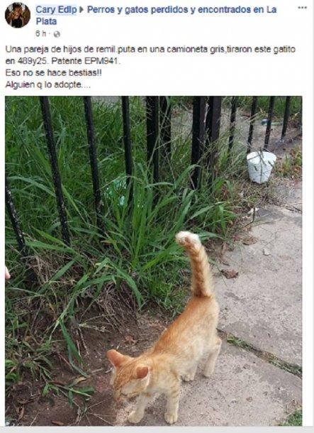 Tiraron un gatito desde una camioneta y...