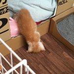ちょっと目を離した隙に?!w布団で寝ていたはずの子猫がずりおちてるw