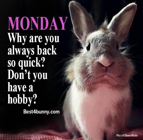 Monday why are you always back so quick? #mondaymorning #MondayMotivation<br>http://pic.twitter.com/AuzU0YKP4u