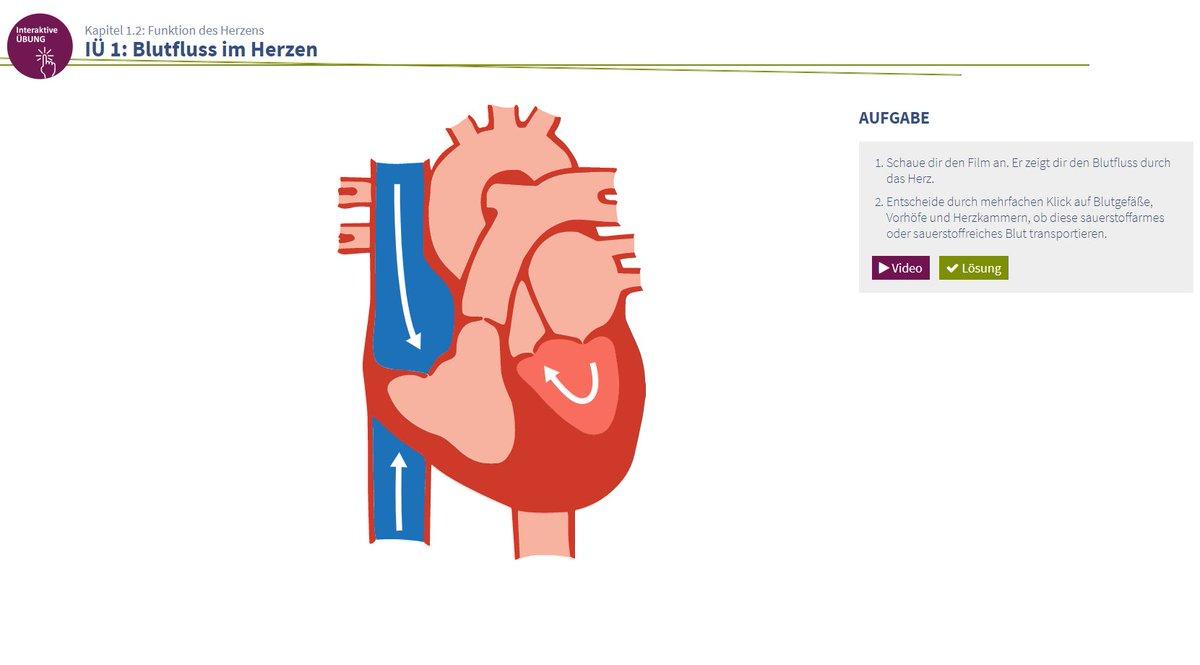 Erfreut Interaktive Herzanatomie Zeitgenössisch - Menschliche ...