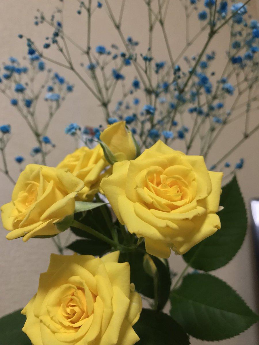 今週しごと多すぎてめちゃくちゃになってしまうことを見越して、心の平穏のために週末生花を飾っておいたから見てる。すべてはめちゃくちゃだけど、お花はとてもきれい。