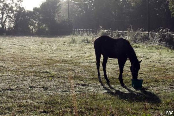 Horse neglect cases on the rise in the S...