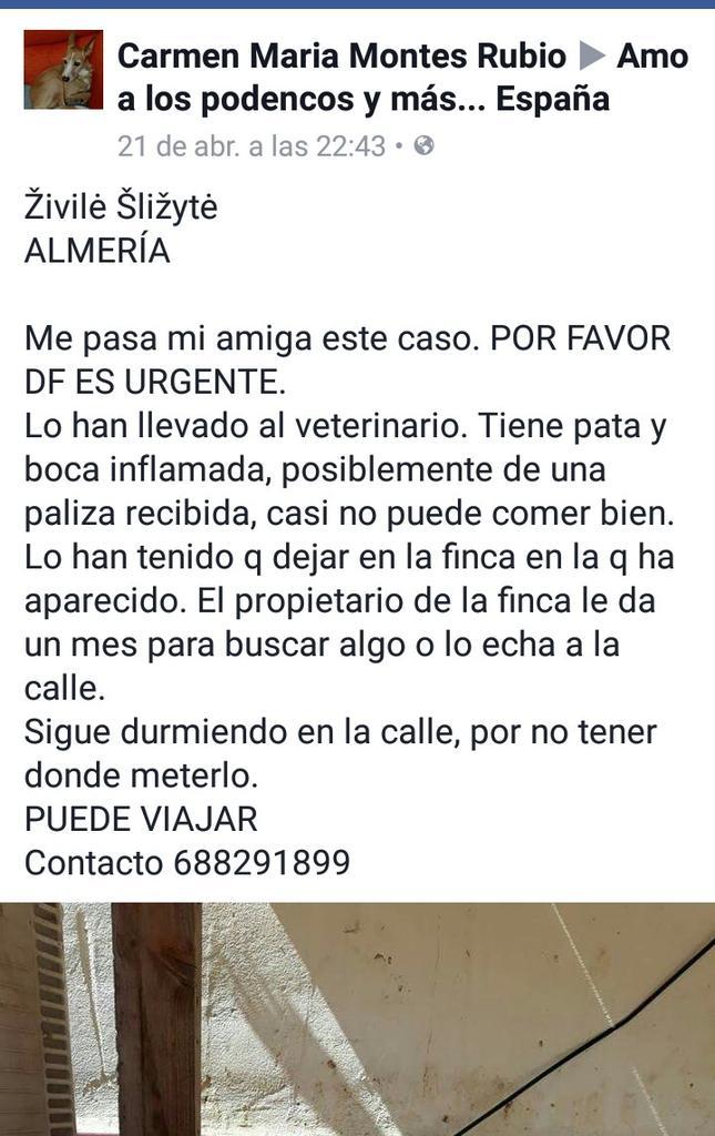 ⚠⚠🆘🆘🆘🆘🐶 #Almeria 🆘🆘🆘🆘 https://t.co/pKoQo...