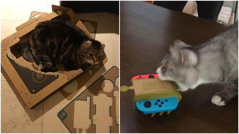 Cats vs. Nintendo Labo: https://t.co/Jo4VCOHBBa https://t.co/fl6ggQ0Ghm