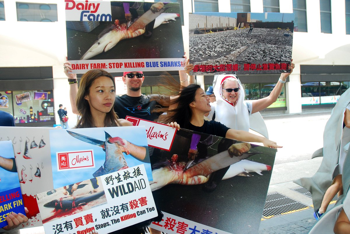 ICYMI: A few more pictures of our Saturday #shark fin protest at Chiuchow Garden in Hong Kong&#39;s Jardine House. The shareholding structure is a bit complicated, but basically Jardine&#39;s own Dairy Farm, which in turn owns Maxim&#39;s. PHOTO CREDIT: SOHOME JACARANDA LILAU <br>http://pic.twitter.com/u1rFbG81Sg