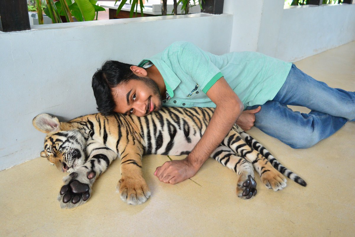 Wajahat On Twitter Best Feeling Ever Baby Tigers Are Extremely Cute And Playful