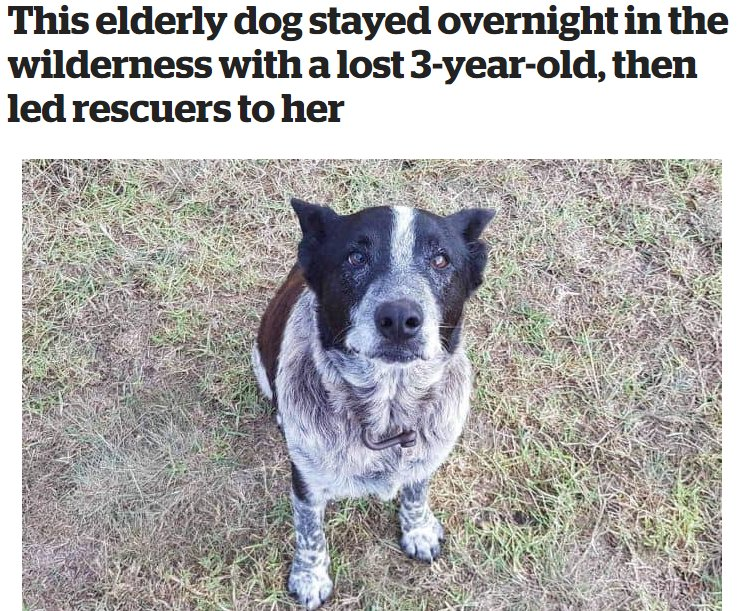 THE GOODEST BOY inews.co.uk/news/elderly-d…