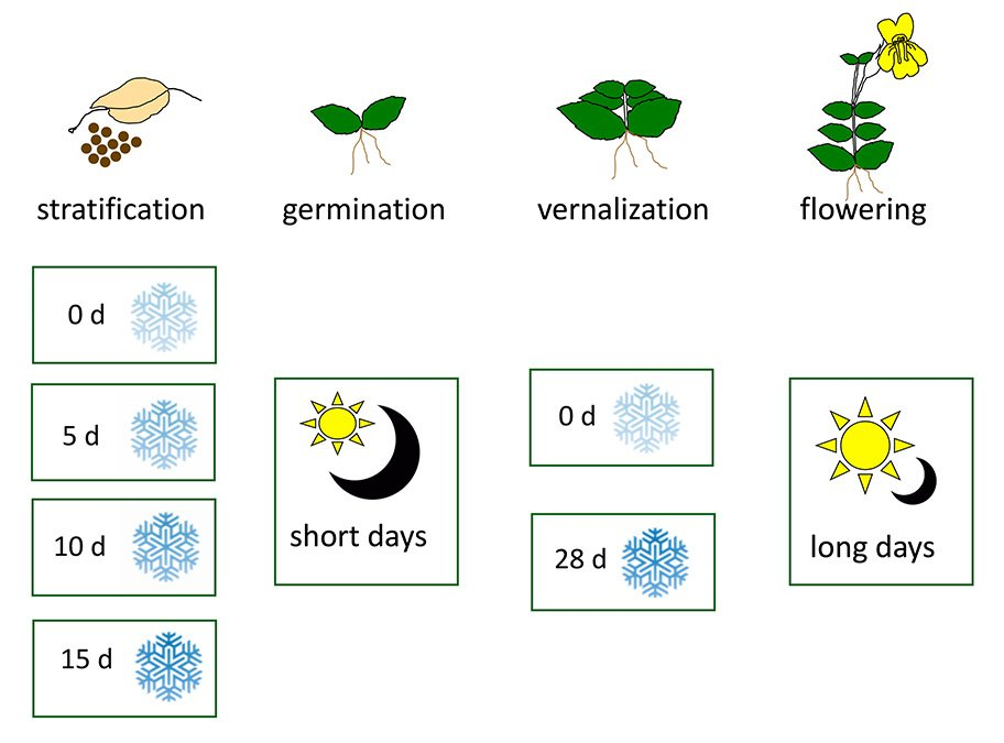 vernalization in hindi