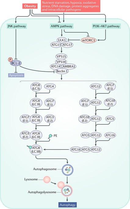 download microscopy immunohistochemistry and antigen retrieval methods