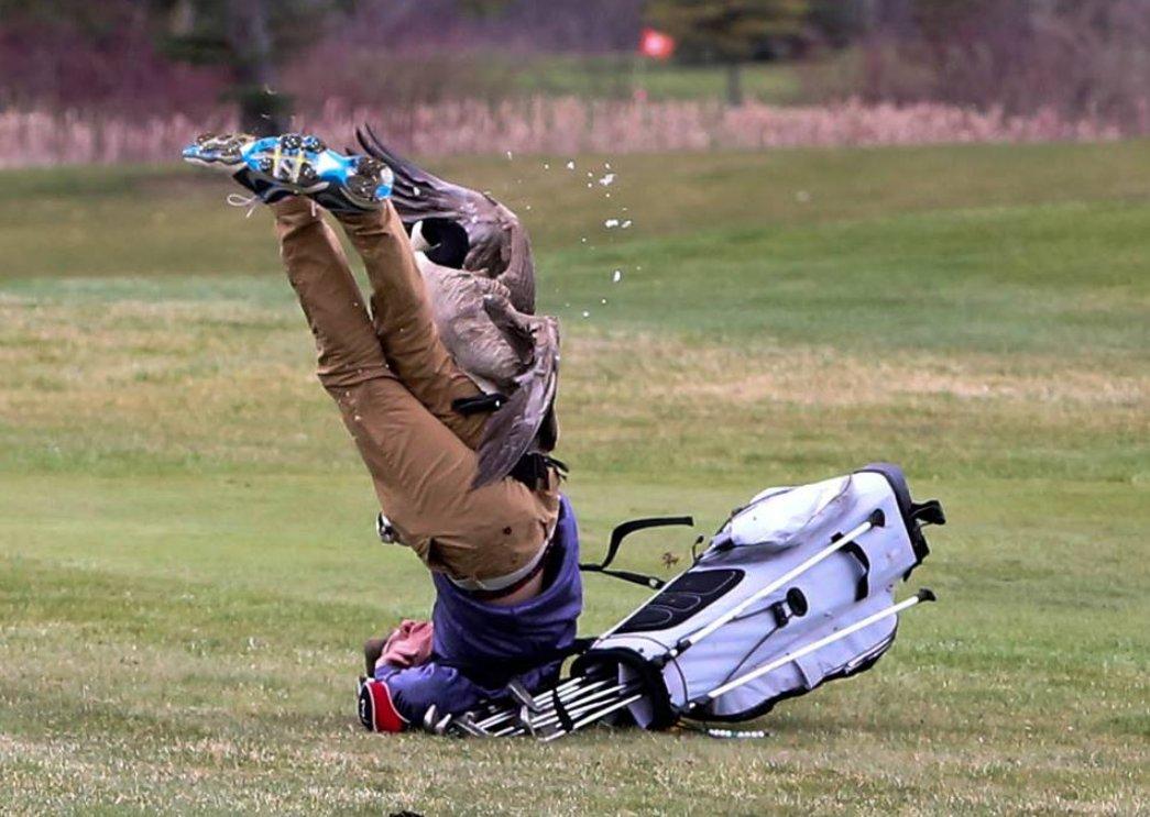 Goose Gives Golfer Beatdown...