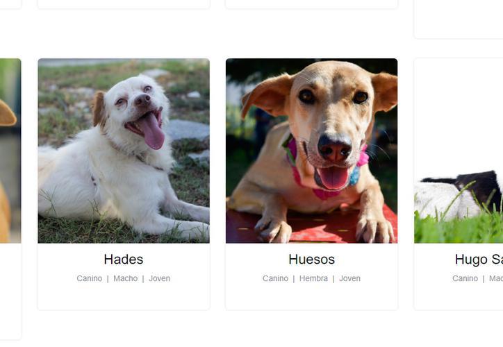 Lanzan página para adoptar perros y gato...