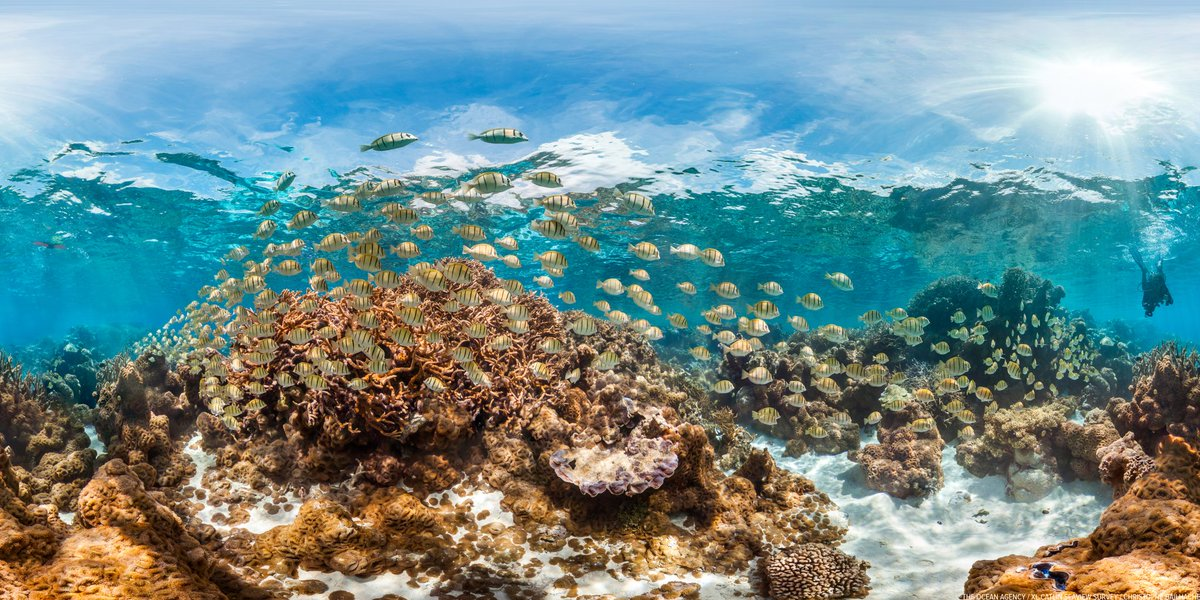 .@MissionBlue recently declared #Palmyra a new #HopeSpot for the future of our worlds #oceans.  #Dive in and see what everyone&#39;s talking about.<br>http://pic.twitter.com/ES3rhzPacb