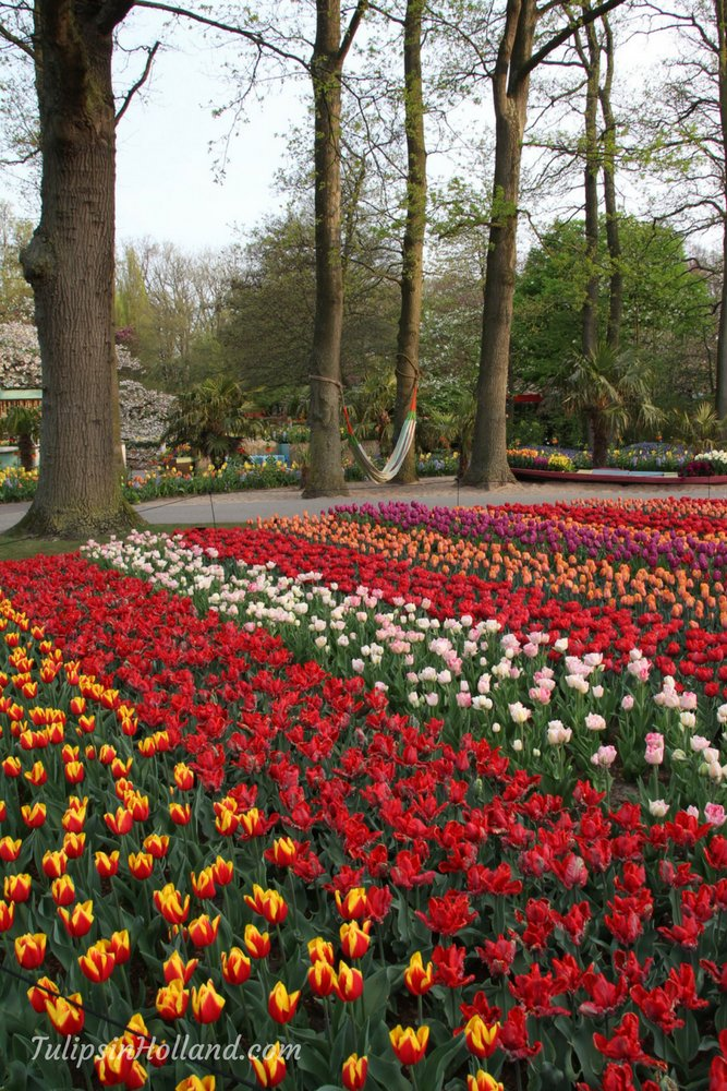 Relaxing spot between the tulips. Enjoy your day today!   #travel to the #tulipsinholland spring 2018  http:// bit.ly/2lwSpNe  &nbsp;  <br>http://pic.twitter.com/QhiIExIqLe