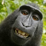 Image for the Tweet beginning: Monkeys Can't Sue over Selfies