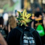 Image for the Tweet beginning: Cannabis Cup and other 4/20