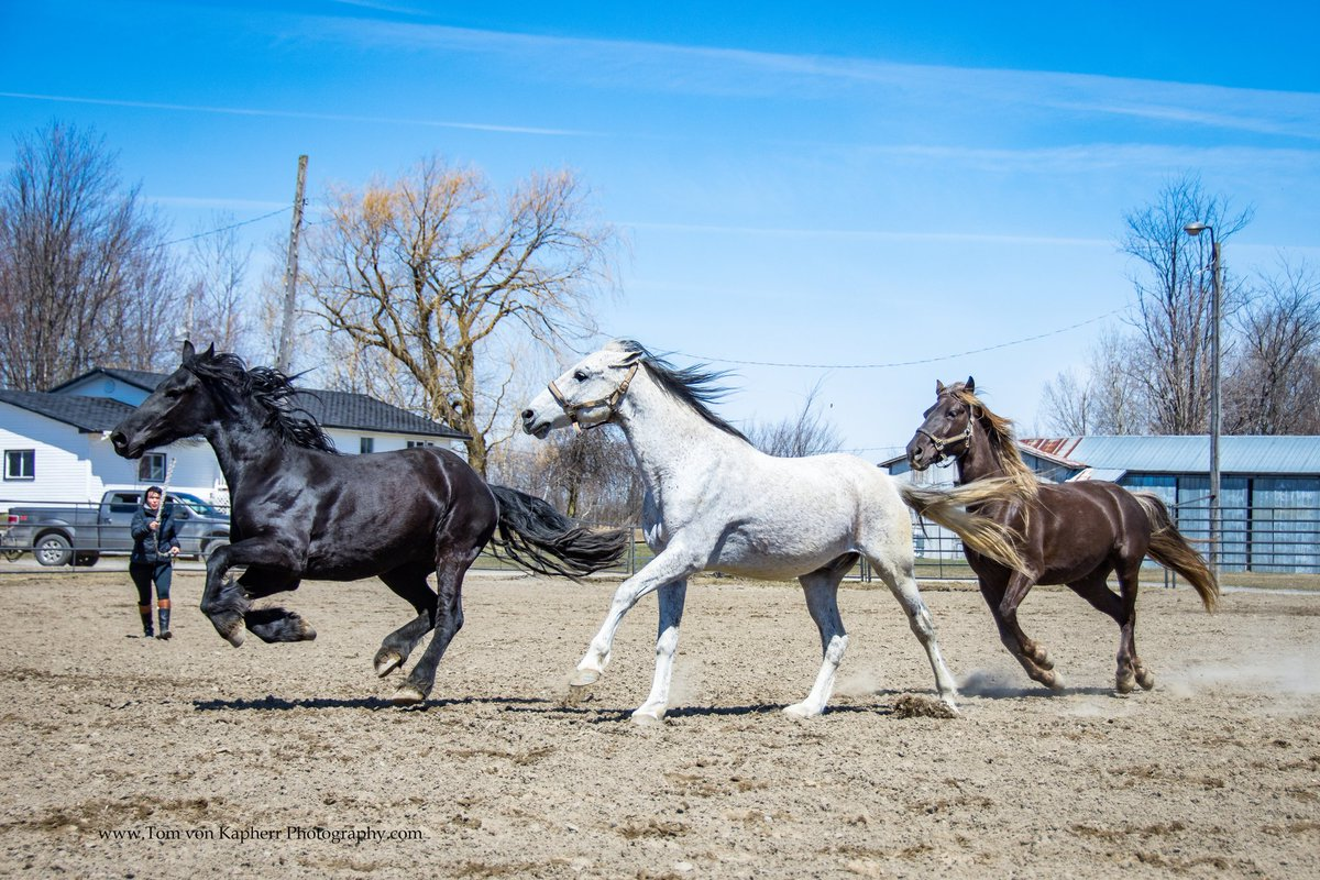 Spring has Sprung in #quebec the 3 amigos go on tear. #HorseHour<br>http://pic.twitter.com/bYtlZsb9Pc