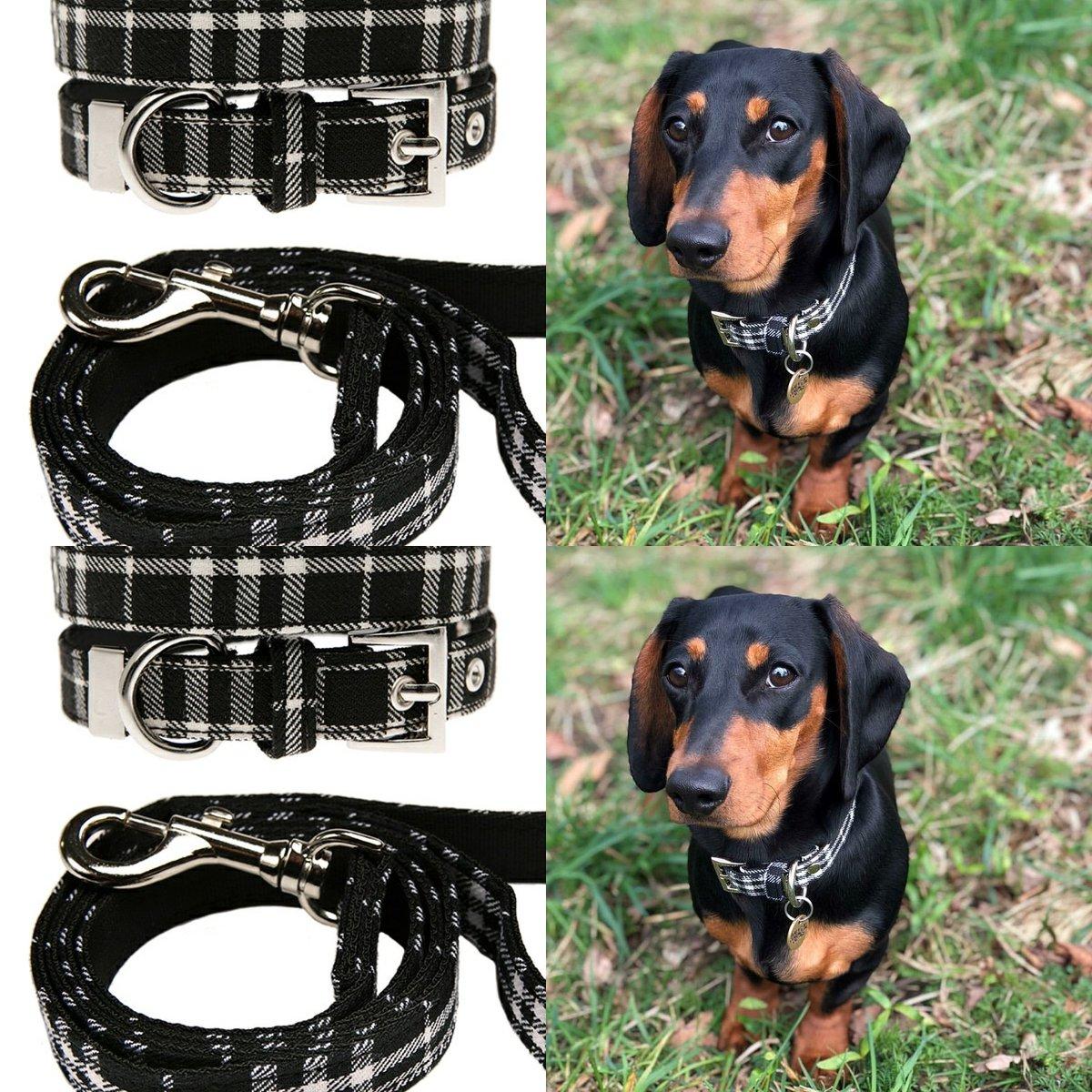 Gorgeous Elvis sporting his new #BlackWhite #tartan #collar from @UrbanPup. Fabulous! #tuesdayselfies #fashion #leads  <br>http://pic.twitter.com/eJelkwdjlZ
