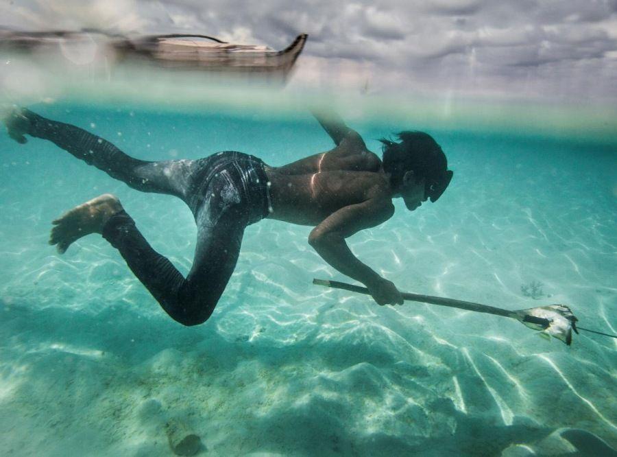 水深60mまで素潜りし10分以上も滞在できるパジャウの人々。脾臓が大きくなるDNA変異があり、遺伝的に水中での活動に適した体になっていることを初めて確認。すごい。/漂海民バジャウ、驚異の潜水能力を「進化」で獲得 https://t.co/kbyUhWa7Hp