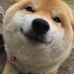 まじで表情が豊かすぎるwすっごい嬉しいのがわかるわんちゃんがかわいすぎw