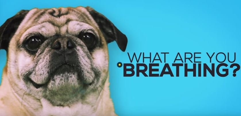 Know the quality of the air around you everyday of the year, wherever you are.  Look for the #AirQualityHealthIndex in your #weather updates and check #AirQuality online  For more information:  http://www. AirHealth.ca  &nbsp;    #PugLife  VIDEO :  http:// ow.ly/hzl630jjTea  &nbsp;  <br>http://pic.twitter.com/6tjBJmZlPG