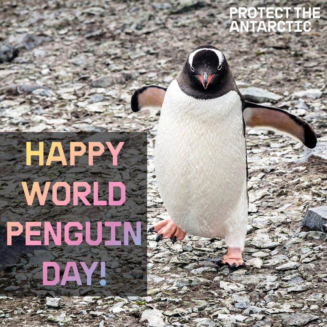 Happy #WorldPenguinDay! Help protect these beautiful wobbly creatures all day...everyday! https://t.co/zIhUMvrOy2
