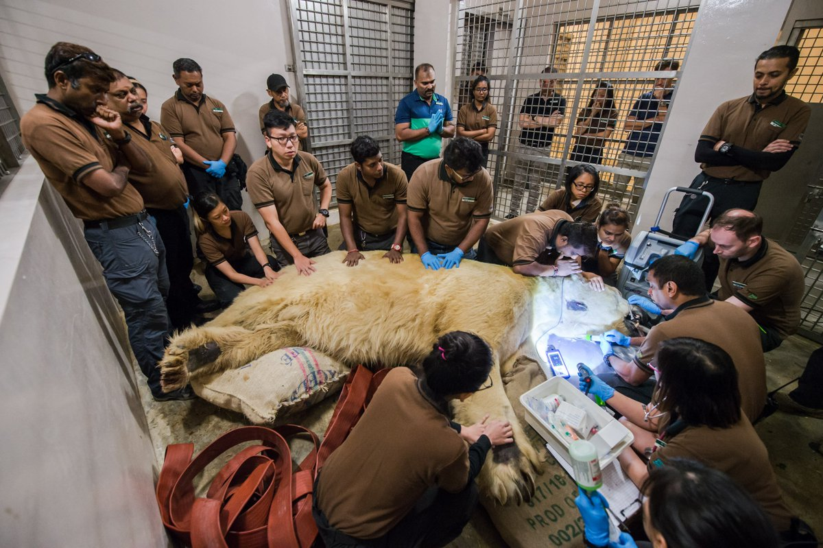 Inuka died surrounded by his keepers: Singapore Zoo releases photos of polar bear's last moments https://t.co/ji1hQ6MCja