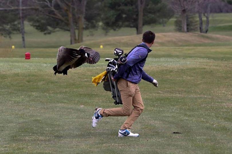 16歳の高校生ゴルファー アイザック君がガチョウにボコられた模様 @ミシガン州