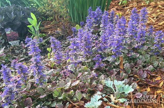 Perennials twitter search add a few pots of shade loving annuals and you have a garden httpssavvygardeningdrought tolerant shade perennials picitterhav1wxs8fe mightylinksfo