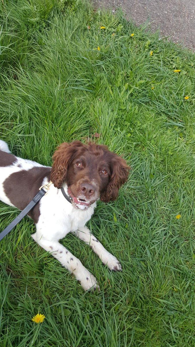 Pd Dog Training Sussex