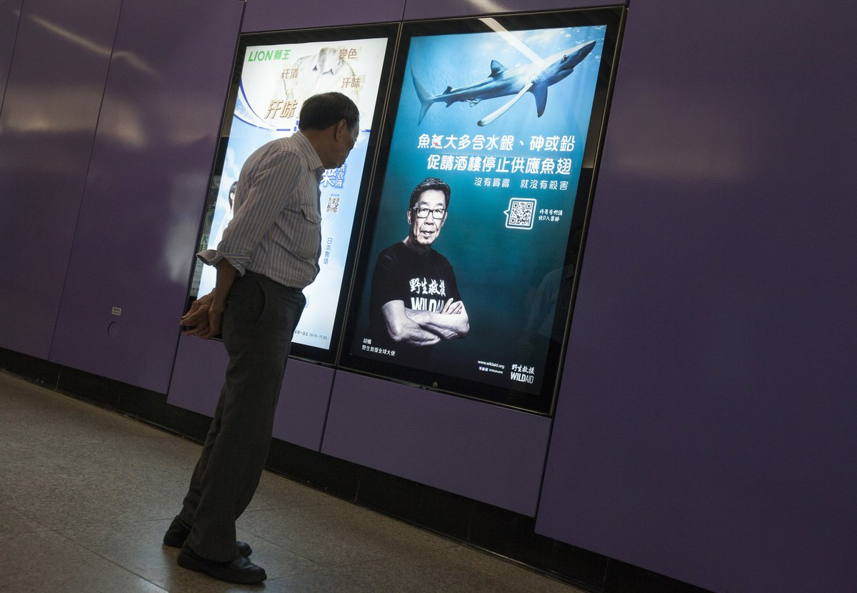 BIG THANKS @JCDecauxGlobal for GREAT placement of our #shark fin health risk ads on Hong Kong MTR subway! As stinky shark fin odours wafted by, a grumpy old dude at heart of Hong Kong shark fin trading area stopped, read it, then mumbled grumpily! Sai Ying Pun MTR Station Exit A2 <br>http://pic.twitter.com/mZl3TnG8xI
