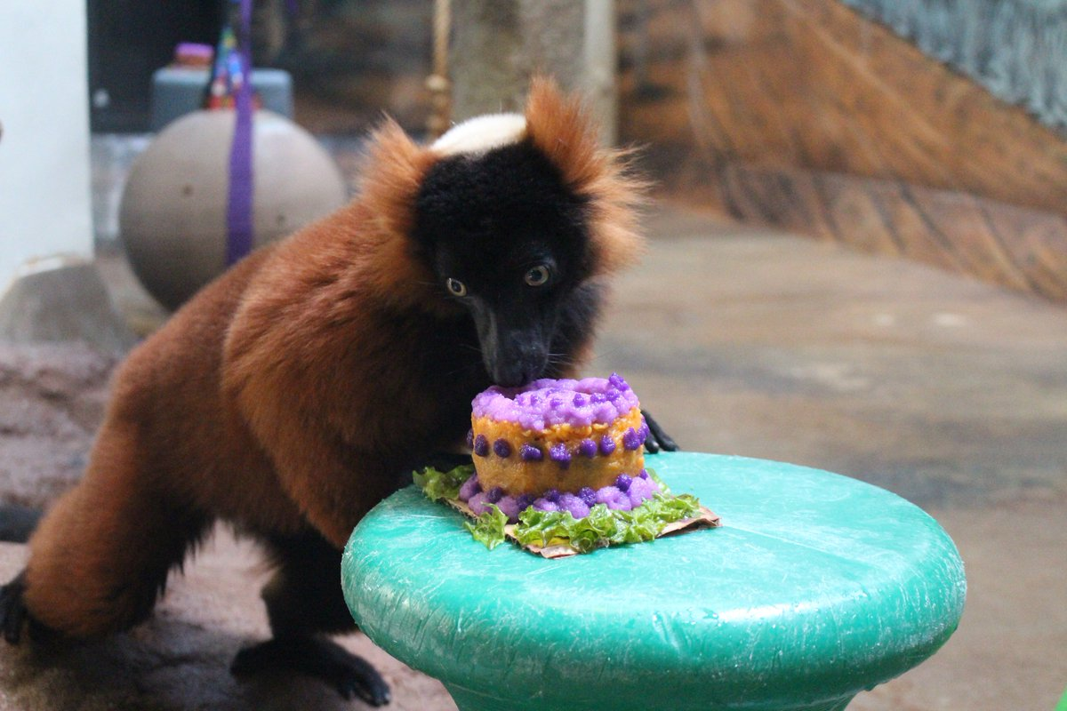 Denver Zoo On Twitter Happy First Birthday To Penny Our