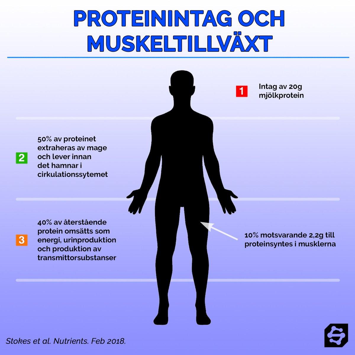 Charmant Urinproduktion Bilder - Physiologie Von Menschlichen ...