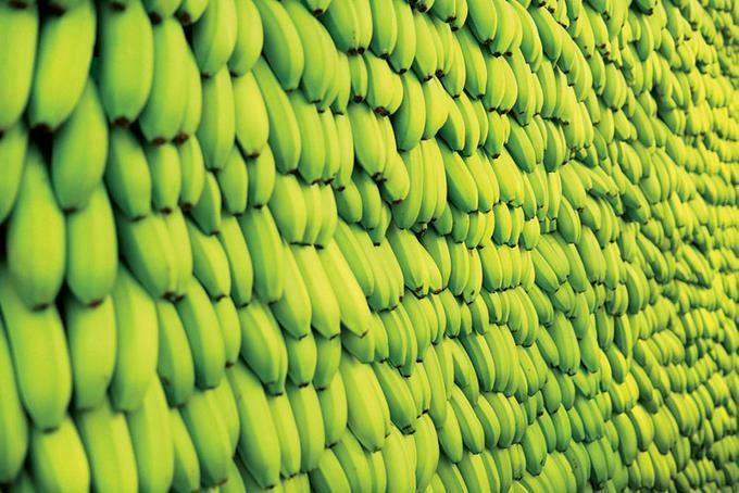 Resultado de imagen para España: hallan casi nueve toneladas de cocaína escondida en bananas