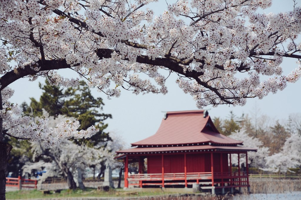 「猿賀公園の花と植木まつり」の画像検索結果