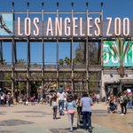 Image for the Tweet beginning: LA to Zoo: The public