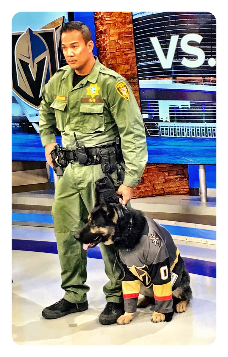 The newest Knight visiting Channel 8.  'K-9 Knight' police dog 🐕.  Thanks to   Maloof family for financing.  20-K for Dog and Training @VegasHockeyNHL