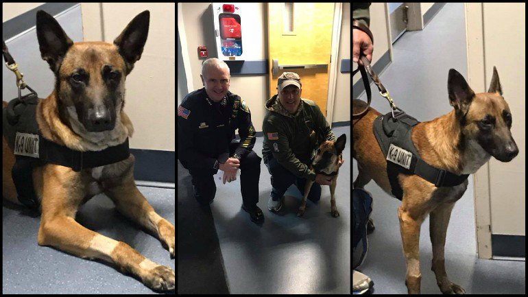 K-9 Nero visits police department for first time since deadly incident: https://t.co/eFlzsm72Et