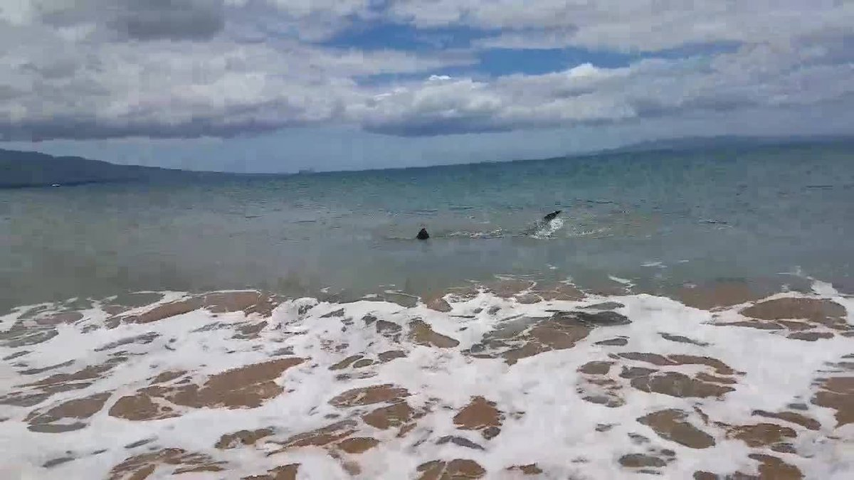 Caught on camera: Shark spotted in shallow waters off Maui dlvr.it/QQq31k