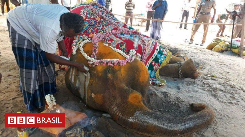 O trágico destino de milhares de elefantes usados em rituais e turismo na Índia https://t.co/tVM4xNzLzg