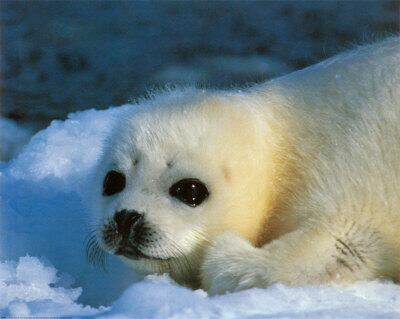 &quot;When you realize the value if ALL #life, you dwell less on what is past &amp; concentrate more on the #preservation of the #future.&quot; ~  Dian Fossey   #sealhunt #SaveTheSeals #EndSealhunt<br>http://pic.twitter.com/Un3XilwByZ