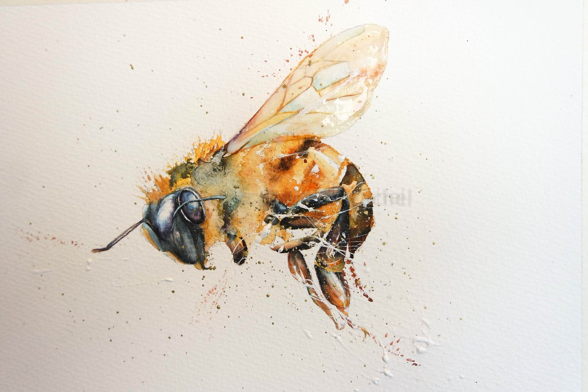 H is for Honey Bee #watercolour #honey #bees #thedailysketch #bigartboost #savethebees #wildlife #animalportrait #movement #honeybee #wildlifeart #devon<br>http://pic.twitter.com/GM7gsSN6Ue