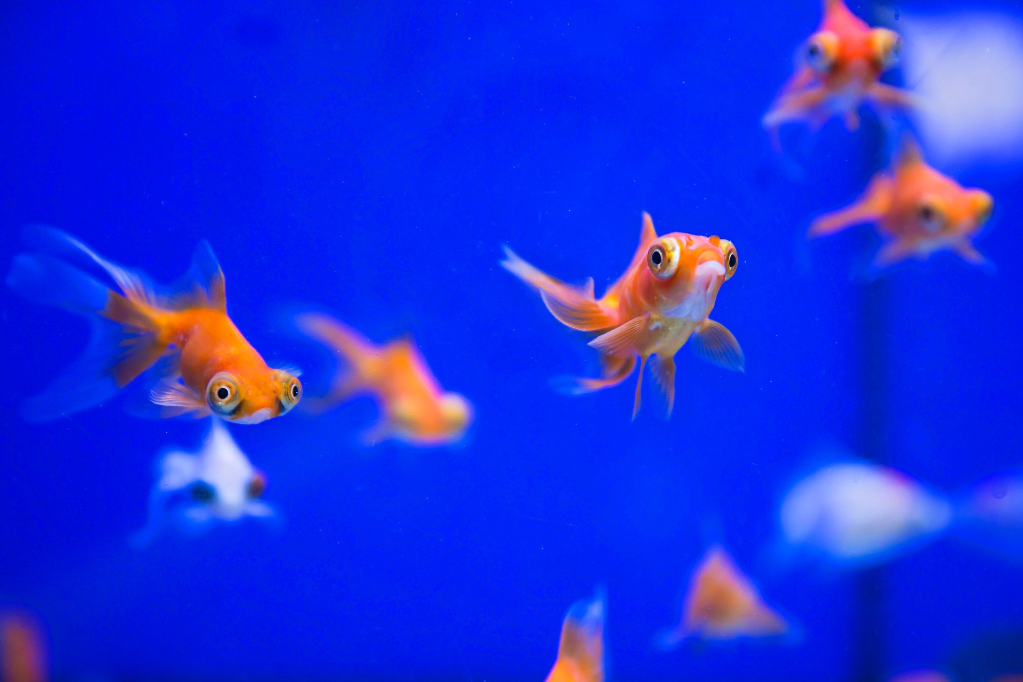 Pets At Home Newport On Twitter Time To Add To Your Tank Stock We Have A Great Range Of Cold Water And Tropical Fish Available In Store Come And See Us And