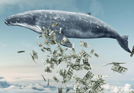 Image result for whale investor