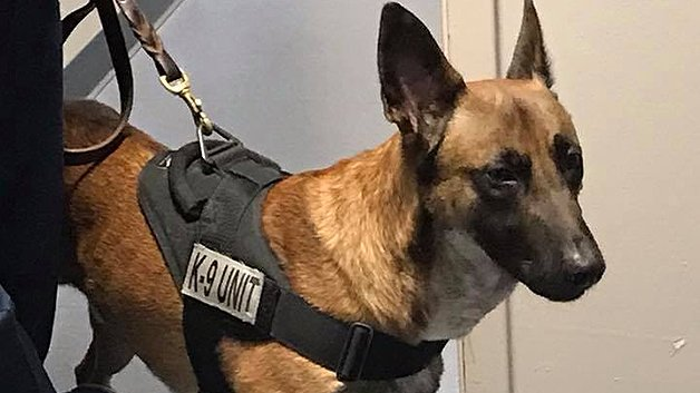 K-9 Wounded In Officer Gannon Murder Visits Yarmouth Police Station https://t.co/KcAJcOWxn0